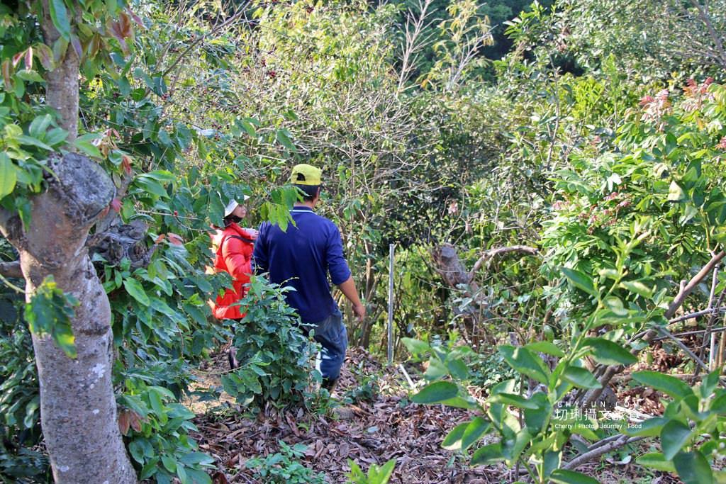 八卦山咖啡07國村咖啡莊園 彰化|走訪八卦山咖啡產地到阿束社看景,聽國村青農栽培得獎咖啡生豆