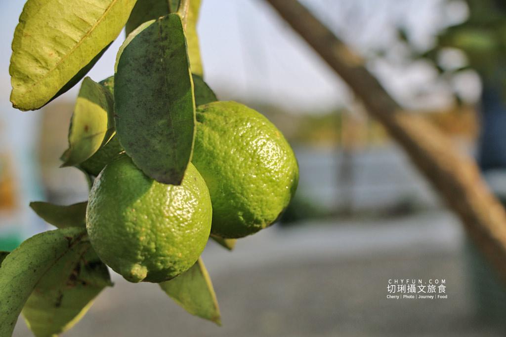 八卦山咖啡08國村咖啡莊園 彰化|走訪八卦山咖啡產地到阿束社看景,聽國村青農栽培得獎咖啡生豆