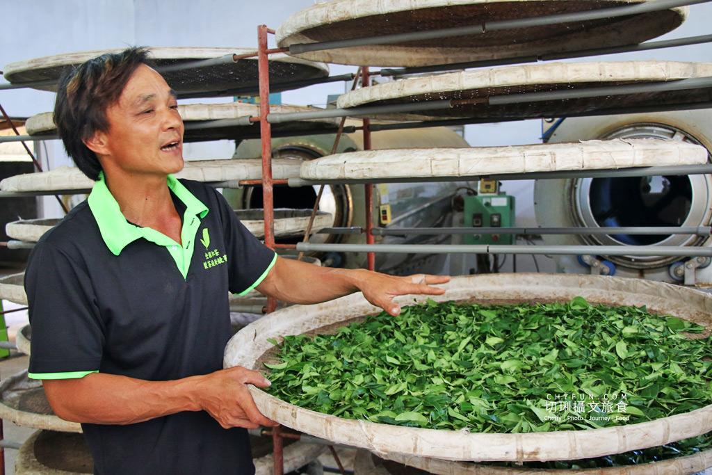 六十石山金針花兩天一夜34_龍安製茶廠採茶品茗
