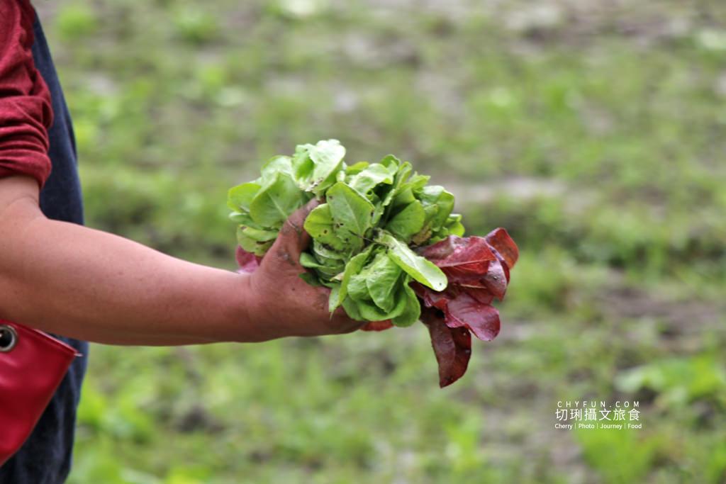 屏東旅遊六堆客家庄採菜體驗趣10 屏東|六堆客家庄採菜體驗趣,半日農夫親土秋收到現採鮮吃沙拉百人響應