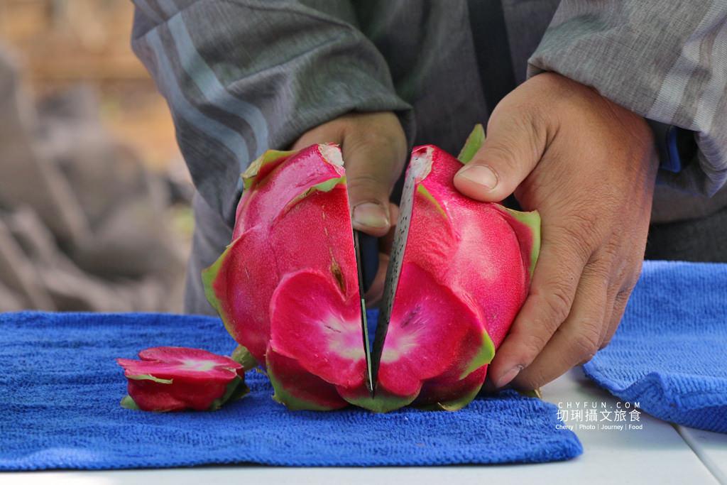 彰化妞妞火龍果園05 彰化|妞妞紅龍果園玩樂搓果種果體驗趣,友善環境培育吃得安全有創意