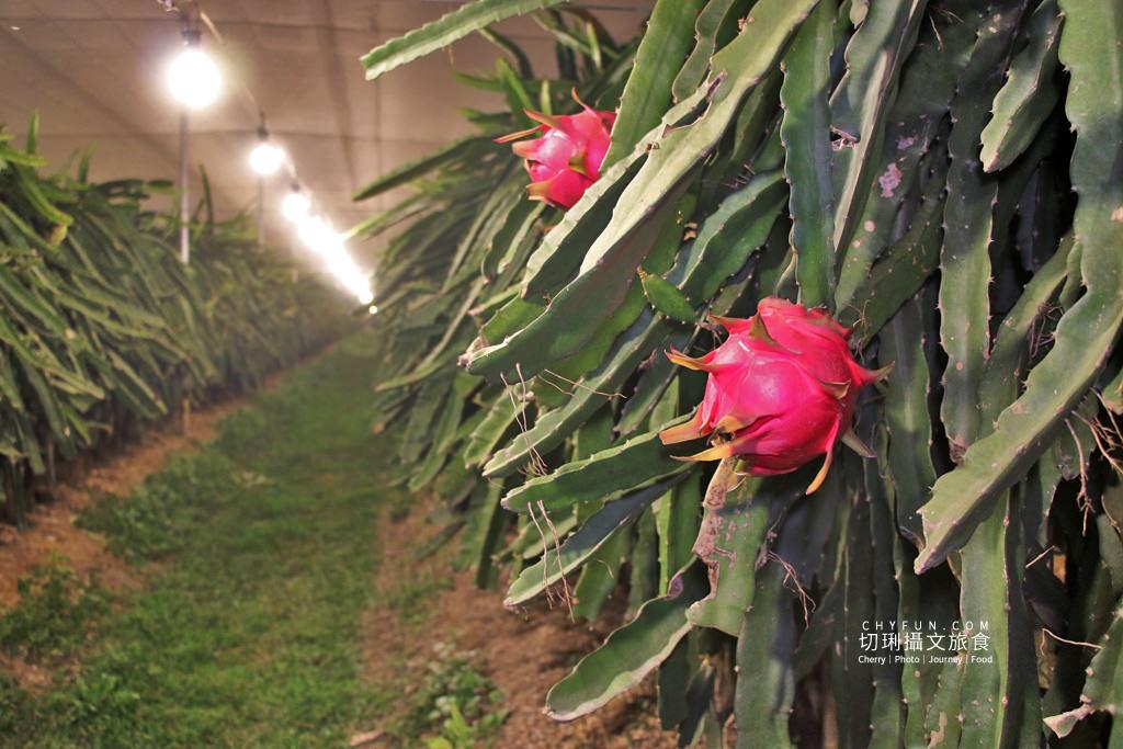 彰化農遊-二林新科果園 彰化|10條彰化農村遊程路線15個好玩有趣點,一二三日遊體驗導覽任你行