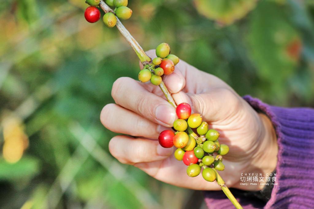 彰化農遊-八卦山咖啡、咖啡張02 彰化|走訪八卦山咖啡產地到阿束社看景,聽國村青農栽培得獎咖啡生豆