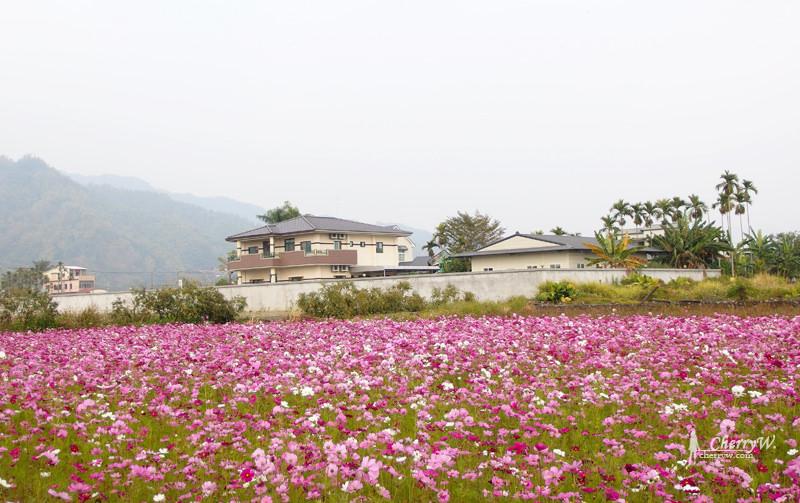 美濃花海17.jpg