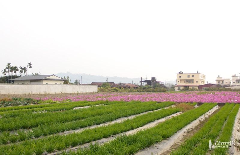 美濃花海19.jpg