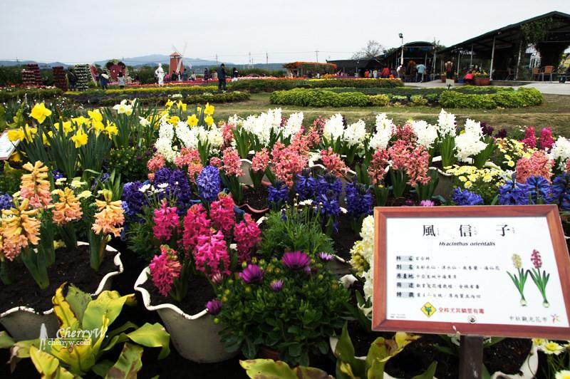 1461756143-d48493fbde9ec1f77dfd7cf378cebe71 台中|中社觀光花市鬱金香花季,歐式庭園浪漫自然