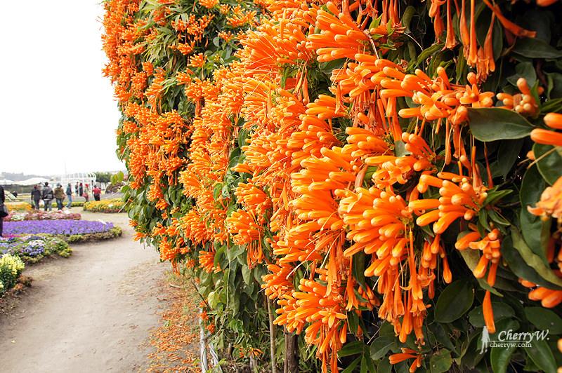 1461756146-2ab085714326ed1efd53de61e78cf8d3 台中|中社觀光花市鬱金香花季,歐式庭園浪漫自然