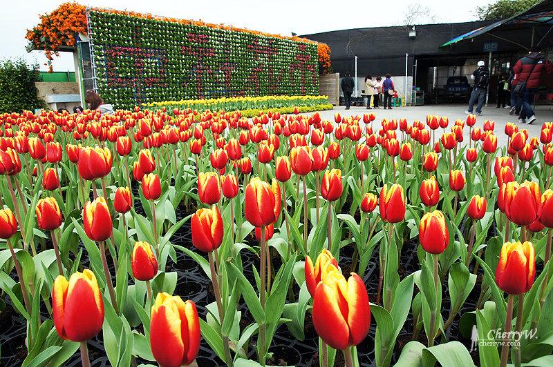 1461756148-8dbd445bc5ec2e932b78d3ca4a44a917 台中|中社觀光花市鬱金香花季,歐式庭園浪漫自然