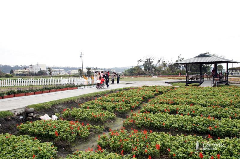 1461756155-902b5a9c1d57e3a96fa8471605b4ada3 台中|中社觀光花市鬱金香花季,歐式庭園浪漫自然