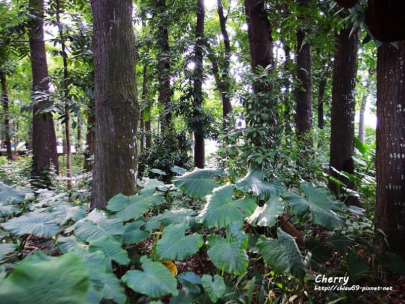1461753799-6d37d4f89e787ee54cf3bfd45dd28630 屏東 手牽手趣遊八大森林樂園,用餐就在雲洞森林餐廳