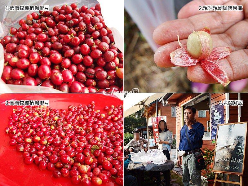 瑪家好山林咖啡農場03.jpg