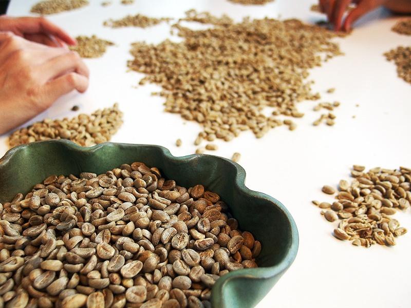 瑪家好山林咖啡農場09.jpg