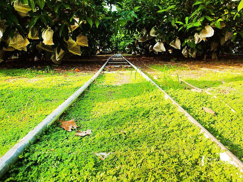 1461756686-b28e6fd1c30d0939d58f2ff57a316136 屏東|自然農法與草生栽培的用心小農-茄苳蓮霧、維根鳳梨、里港檸檬