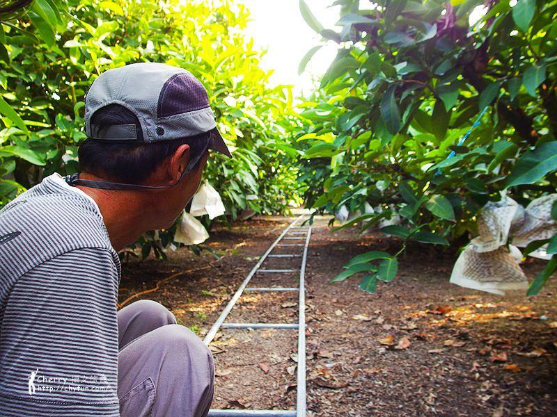 1461756688-652cf3152ef016d55128a95169204f7e 屏東|自然農法與草生栽培的用心小農-茄苳蓮霧、維根鳳梨、里港檸檬