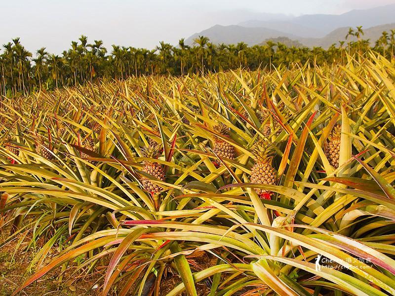 1461756692-1c84f8d42f8aa8797f31aa7c7cd2c628 屏東|自然農法與草生栽培的用心小農-茄苳蓮霧、維根鳳梨、里港檸檬