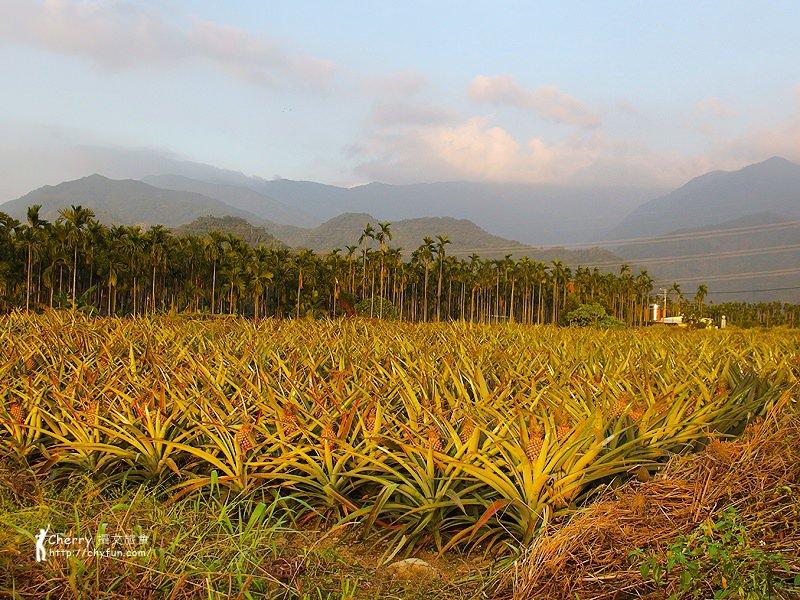 1461756693-8c7505eb537f24b83474871853cb8cee 屏東|自然農法與草生栽培的用心小農-茄苳蓮霧、維根鳳梨、里港檸檬
