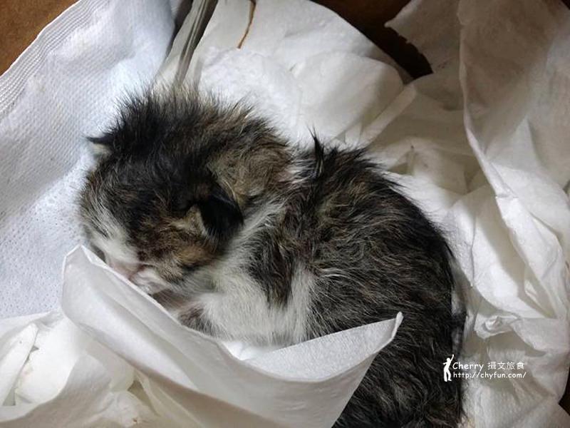 1461756910-f196b9e09212cea5a1a42388b81b0da2 記錄|撿到新生貓咪照護的心路歷程