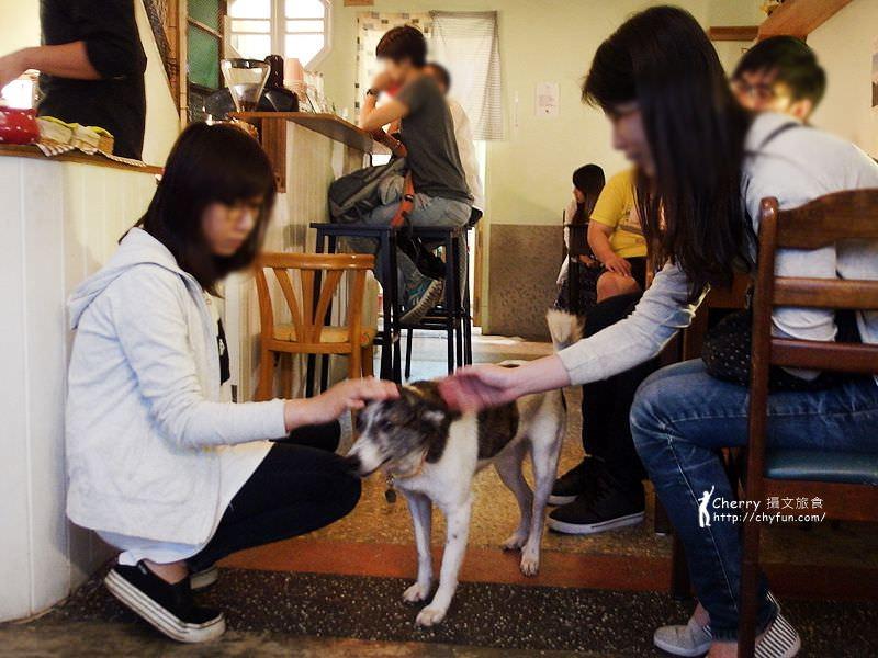 1463177934-3f1eabf0e2e4b992ed46d0d5145d5a8c 台北、貓餐廳|浪浪別哭流浪動物中途與咖啡空間,讓愛不流浪