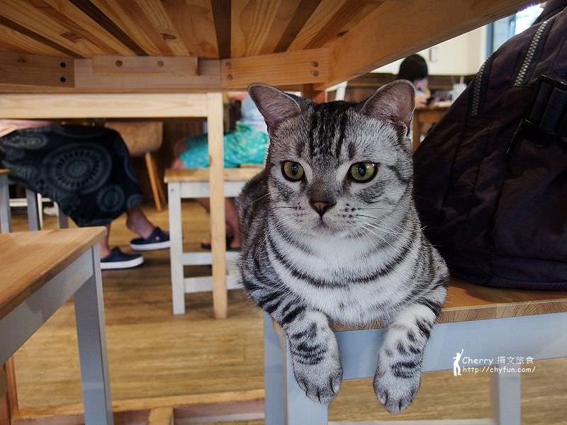 1463238131-fa075b2c4905051d9f62fb5156fa67cc 高雄、貓餐廳|描Cafe X 屋Brunch,與貓狗一同用餐