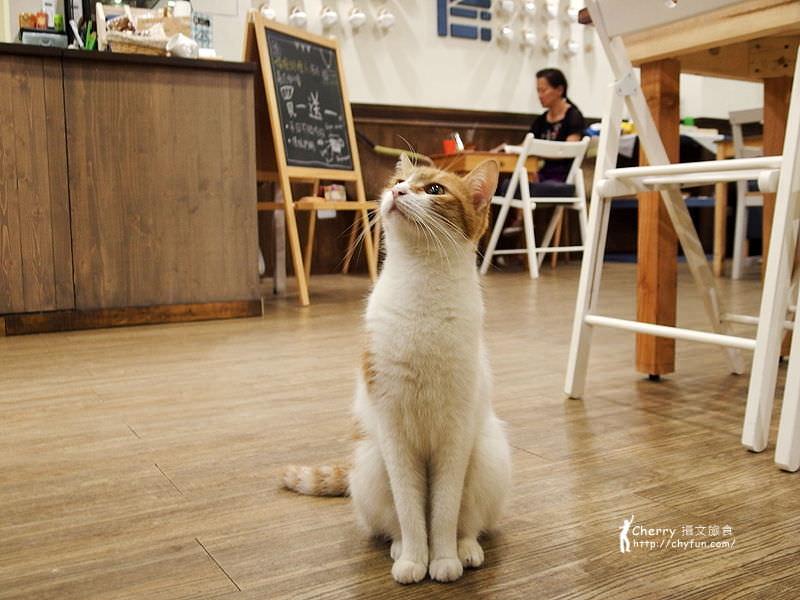 1463238187-2f7b097265e340c7aaf7210210c3f6e0 高雄、貓餐廳|描Cafe X 屋Brunch,與貓狗一同用餐