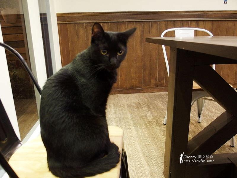 1463238197-d091f84f6818ccec35293a5208c2ef5e 高雄、貓餐廳|描Cafe X 屋Brunch,與貓狗一同用餐