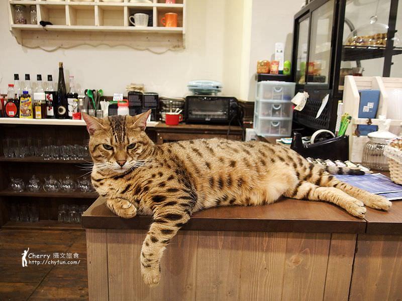 1463238199-b9f25788beda44b3adf6152445d5659e 高雄、貓餐廳|描Cafe X 屋Brunch,與貓狗一同用餐