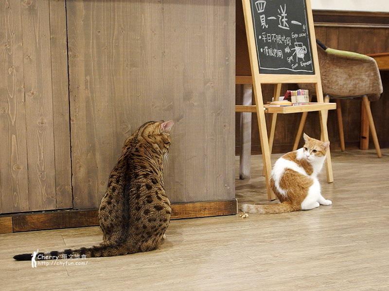 1463238201-1be2d449b19564788c93064c403d441d 高雄、貓餐廳|描Cafe X 屋Brunch,與貓狗一同用餐