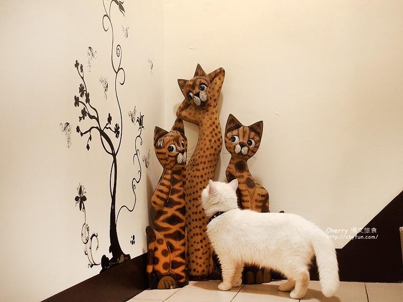 1471259020-93807f6e83a62e385cc8f9837f69e785 高雄、貓餐廳|逗貓趣Funny Cat,多貓兒陪寵又萌又療癒