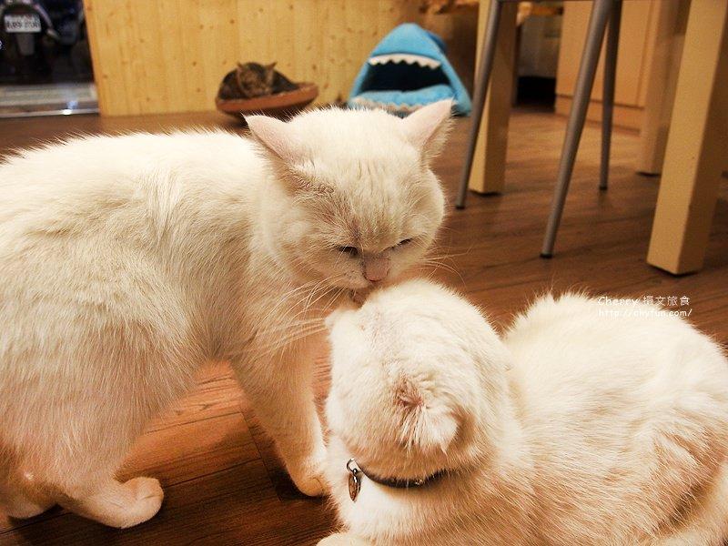 1471259102-4cb67accbc4d8fe745883e583510b042 高雄、貓餐廳|逗貓趣Funny Cat,多貓兒陪寵又萌又療癒