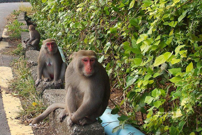 macaque01