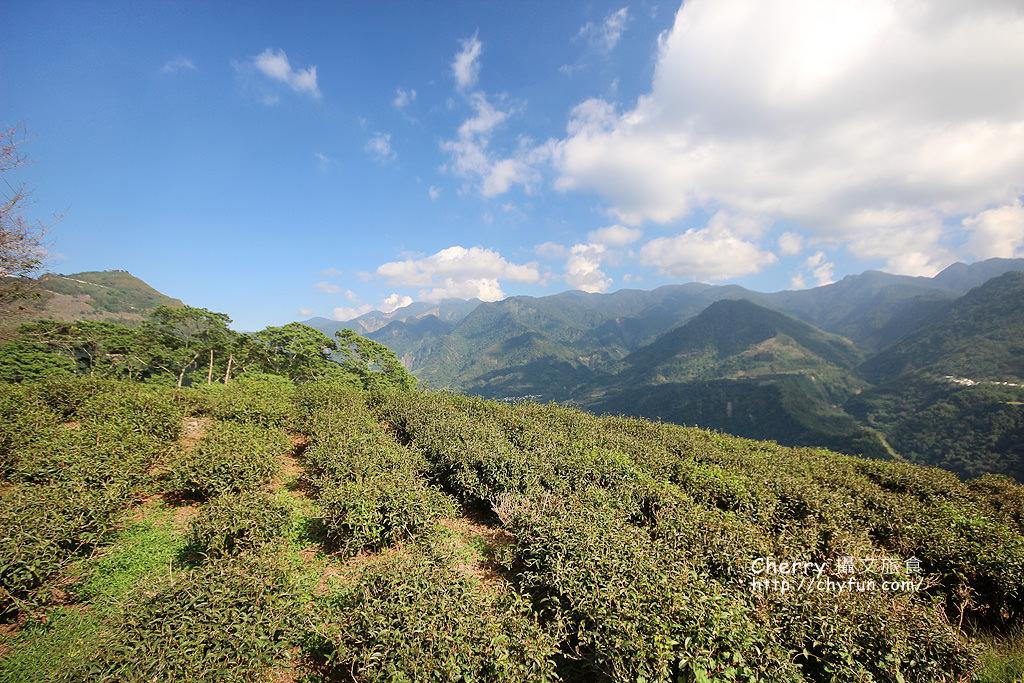 1487931342-f5b7e4c2b0e3b3109abfead22be77500 高雄 那瑪夏僑香咖啡高山看茶園櫻花林,品嚐高品質海拔的酸甘甜
