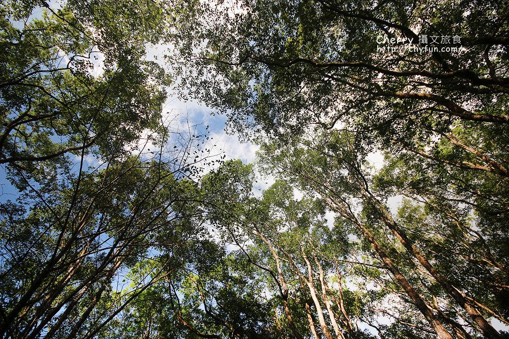 1487932597-ccfab106421af92039a9bf7075a35f1f 高雄|瑪雅樟樹林公園,沐浴在芬多精森林浴