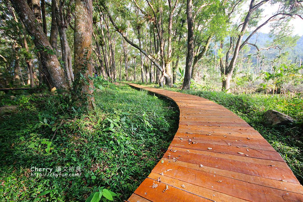 1487932612-841c2ca57ccc1c4853826b992d6e4d78 高雄|瑪雅樟樹林公園,沐浴在芬多精森林浴