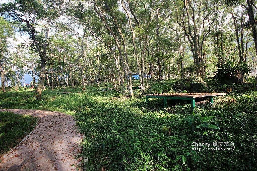 1487932614-9b215b0512a43aa994806e16b95182aa 高雄|瑪雅樟樹林公園,沐浴在芬多精森林浴