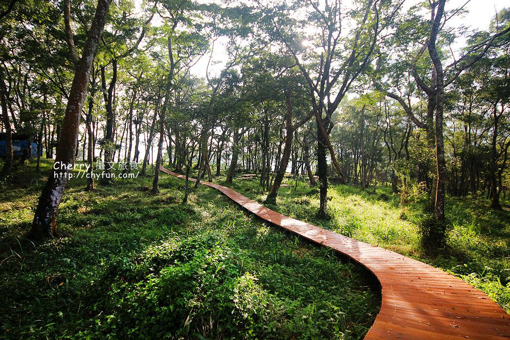 1487932617-20bb28449cdd51fe1a87afa76df190ed 高雄|瑪雅樟樹林公園,沐浴在芬多精森林浴