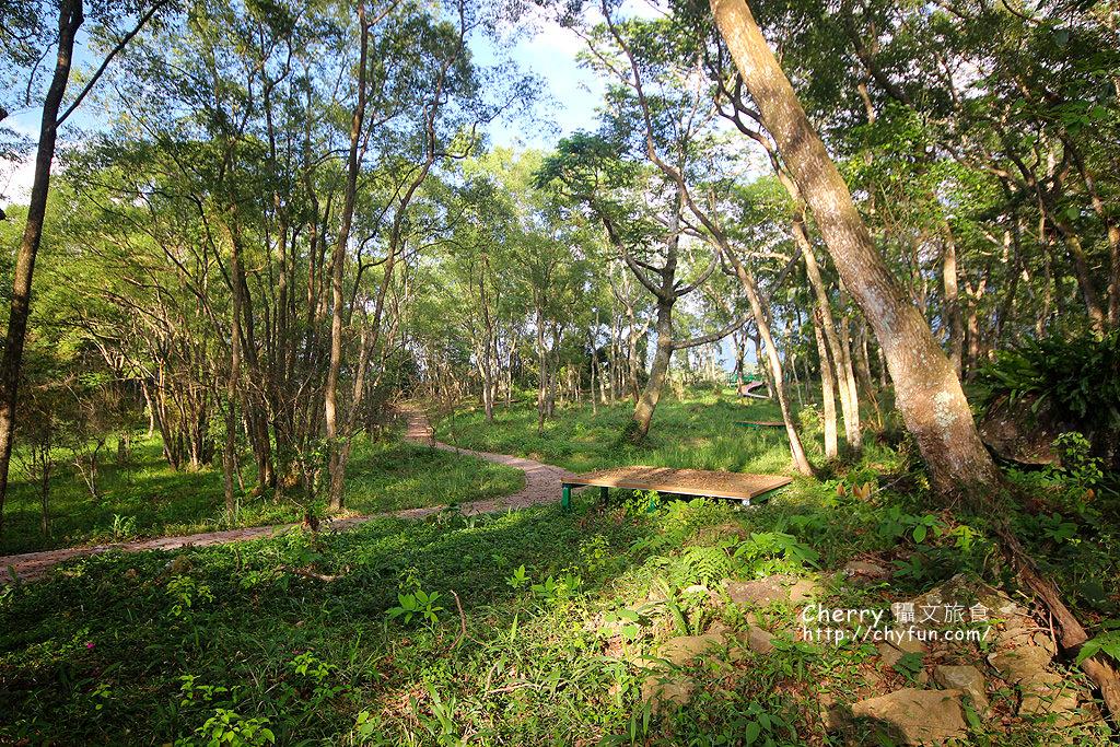 1487932620-5d358749d1ccc5dda362c544c3b2dc85 高雄|瑪雅樟樹林公園,沐浴在芬多精森林浴