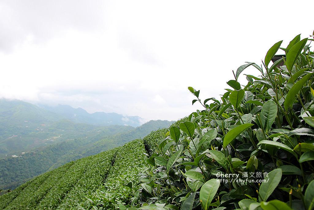 20170621071743_16 嘉義|梅山碧湖,雲海山嵐仙境採茶配咖啡濃人文味
