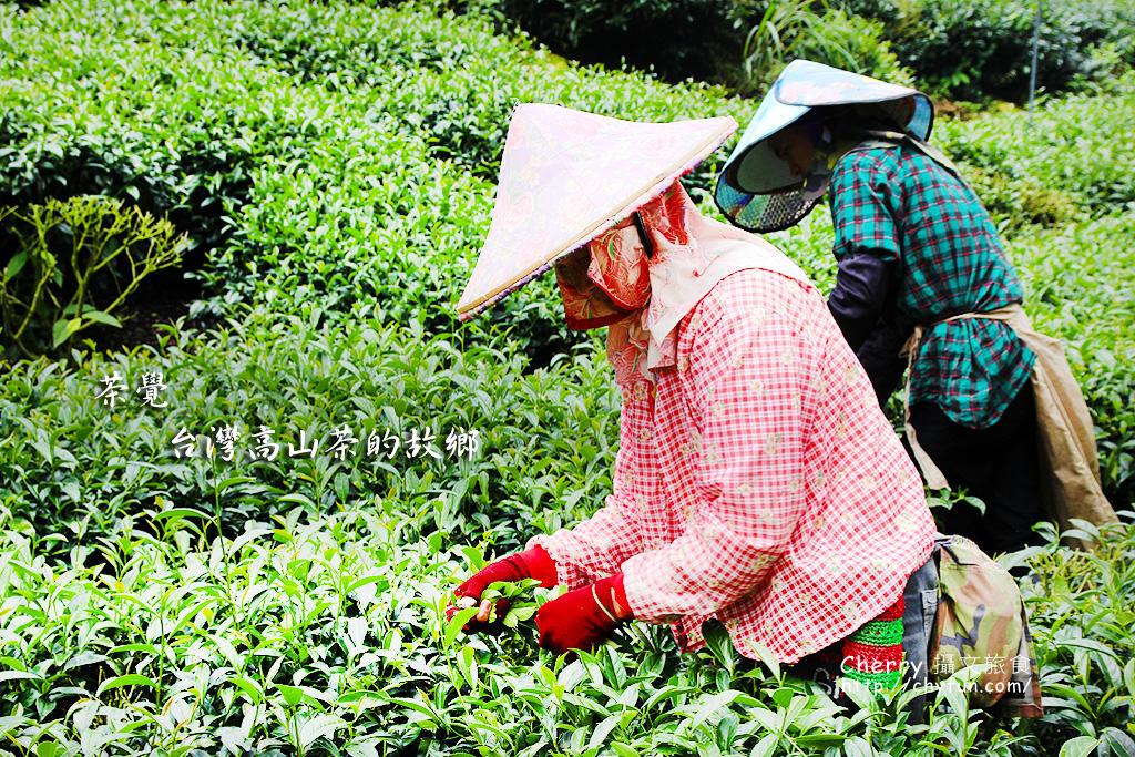 茶覺台灣高山茶的故鄉