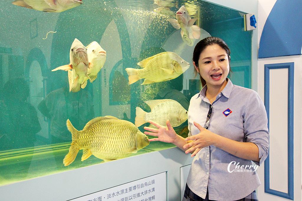 20171012094608_25 雲林|口湖台灣鯛生態創意園區,看魚遊互動好玩自然課