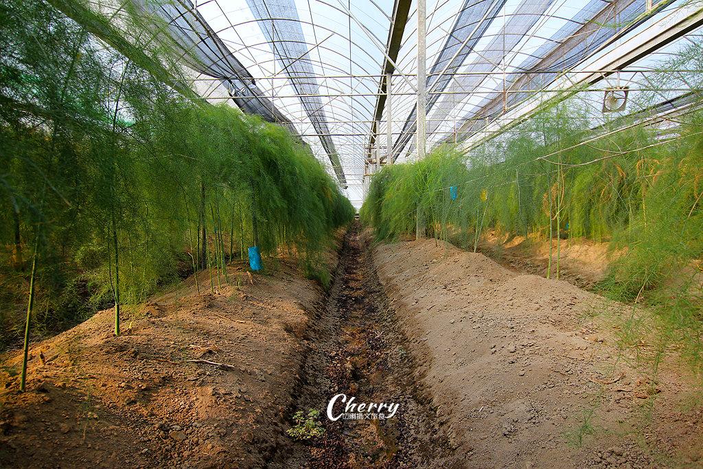20171104041823_6 雲林|土庫溫室有機蘆筍園,來去大坵田農場採喝蘆筍汁