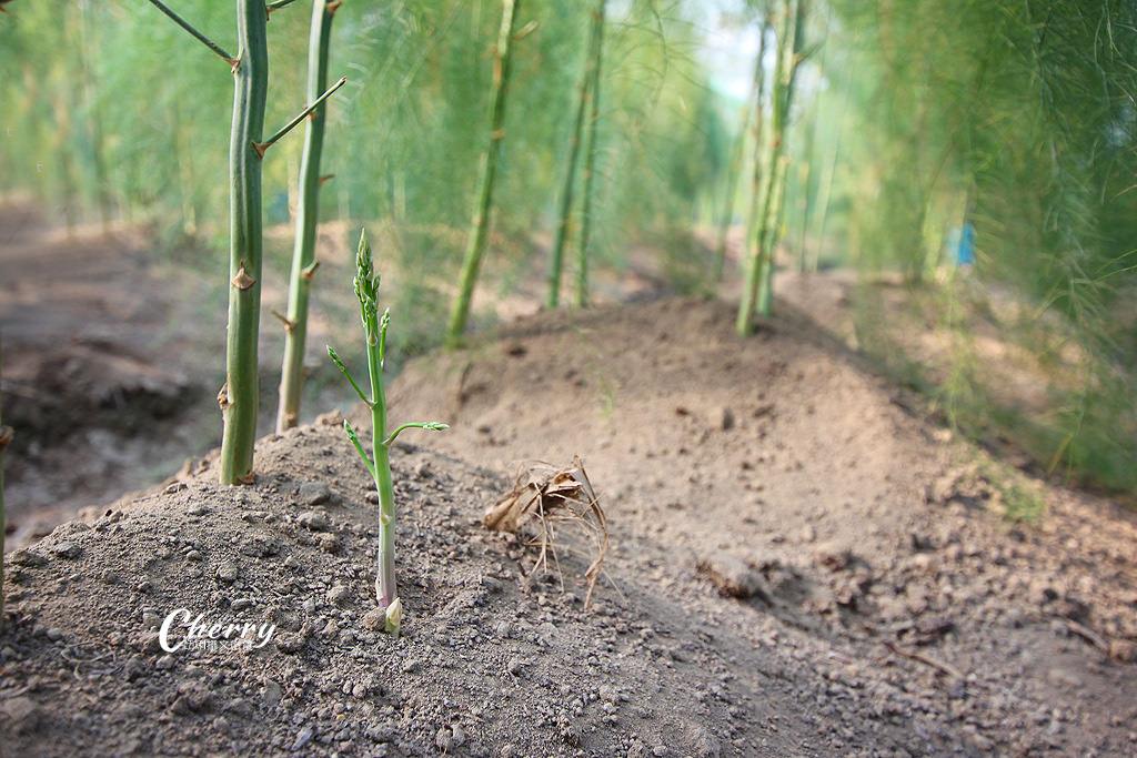 20171104041832_74 雲林|土庫溫室有機蘆筍園,來去大坵田農場採喝蘆筍汁