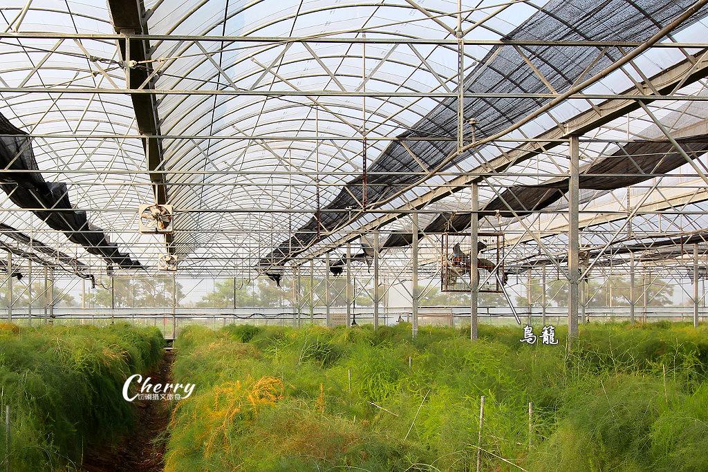 20171104041853_6 雲林|土庫溫室有機蘆筍園,來去大坵田農場採喝蘆筍汁