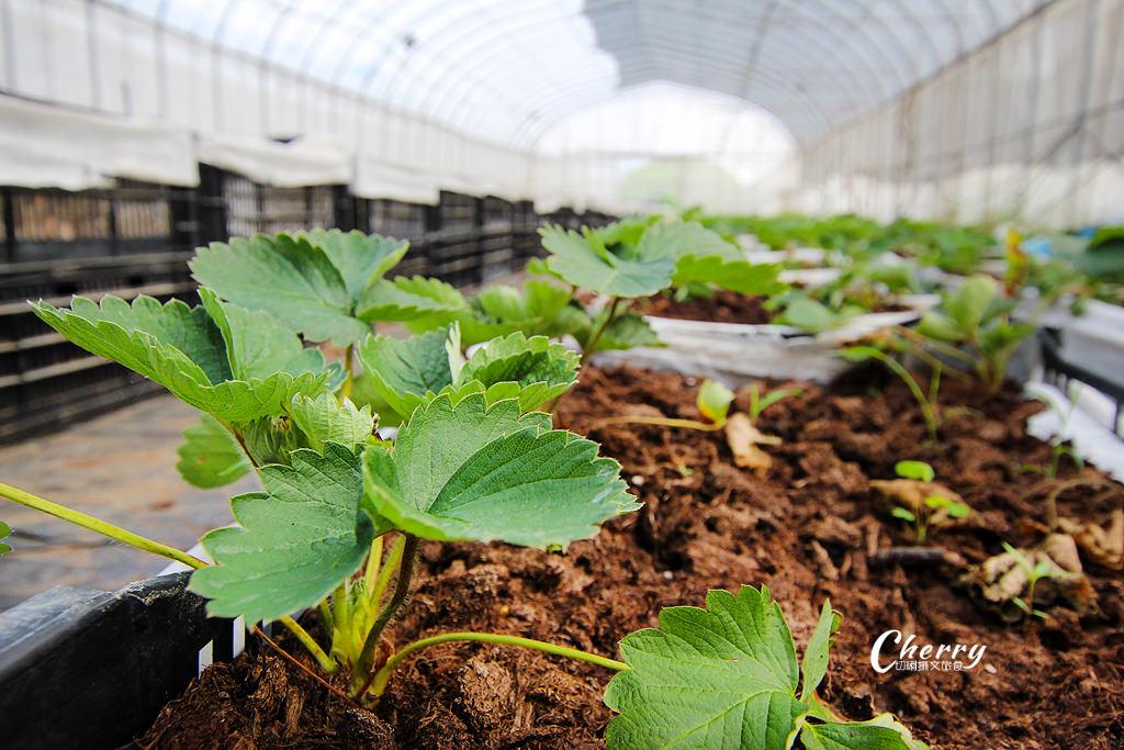 20171122040203_41 嘉義|中埔農夫冰,在幸福有機農場饗冰品慢食蔬果