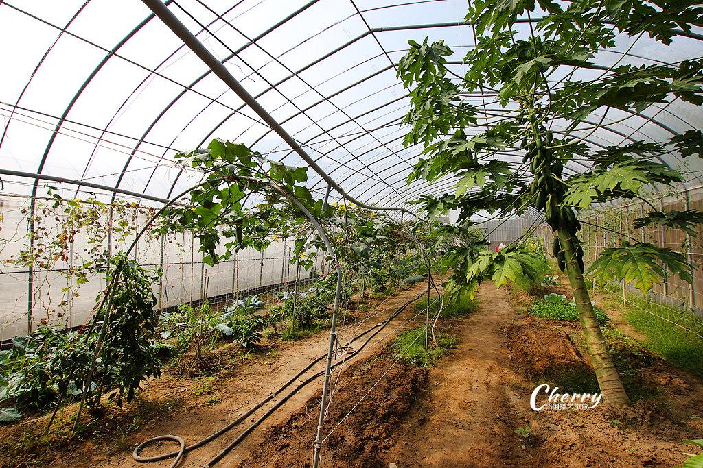 20171122040210_74 嘉義|中埔農夫冰,在幸福有機農場饗冰品慢食蔬果