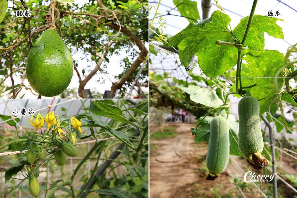 20171122040213_52 嘉義|中埔農夫冰,在幸福有機農場饗冰品慢食蔬果