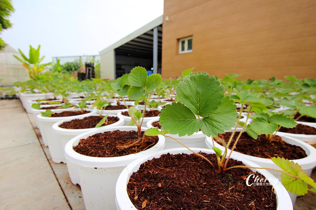 20171122040218_53 嘉義|中埔農夫冰,在幸福有機農場饗冰品慢食蔬果
