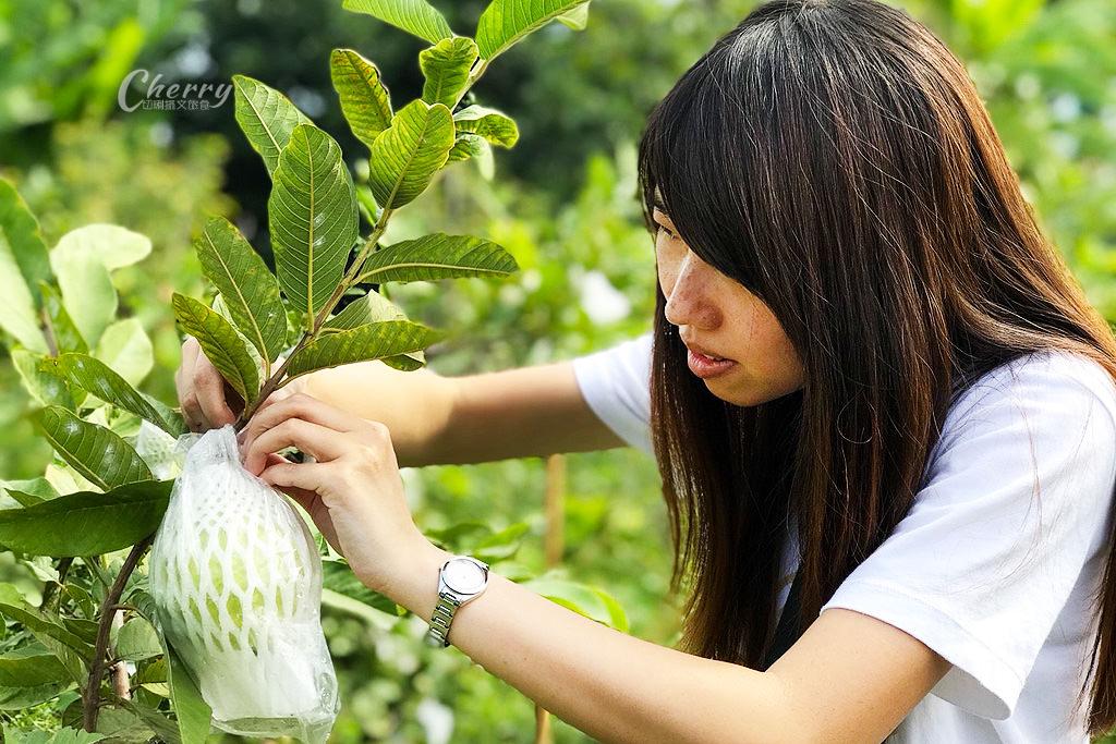 20171122103010_74 嘉義|中埔農夫冰,在幸福有機農場饗冰品慢食蔬果