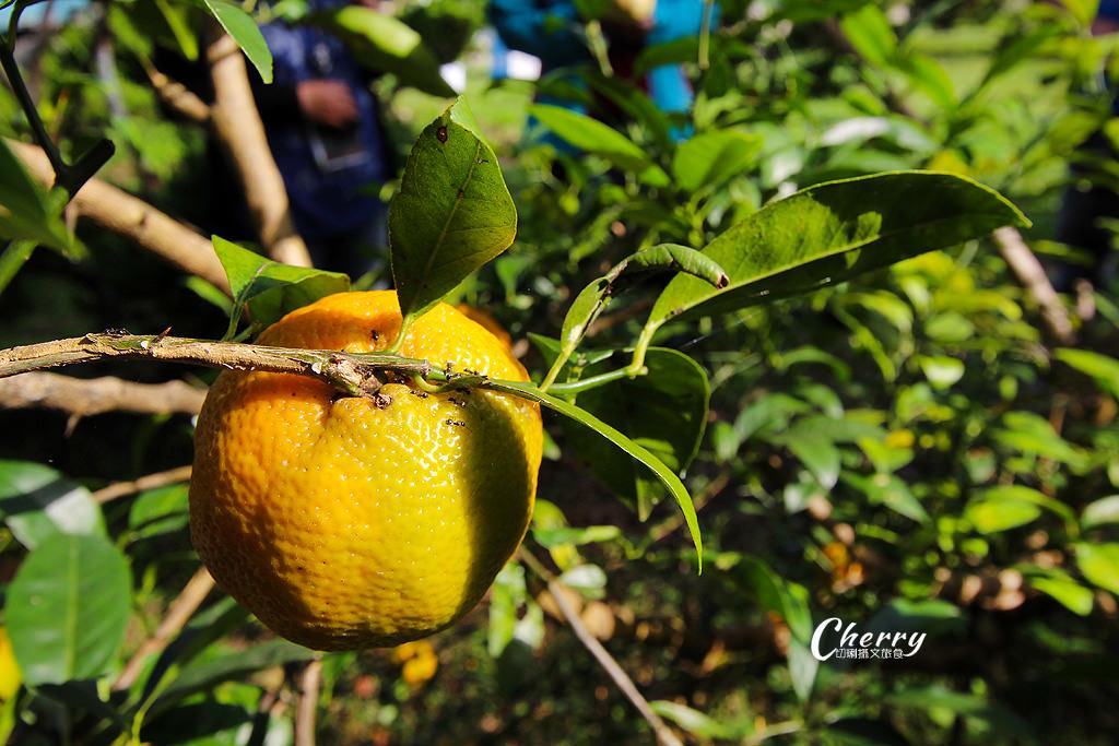 20171122121757_43 嘉義 番路好柿抵嘉農場,採果玩柿染還有露營趣