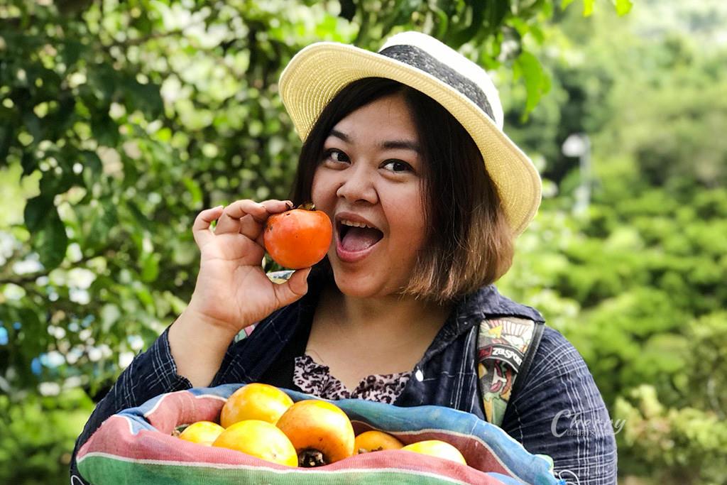 20171122121815_77 嘉義 番路好柿抵嘉農場,採果玩柿染還有露營趣