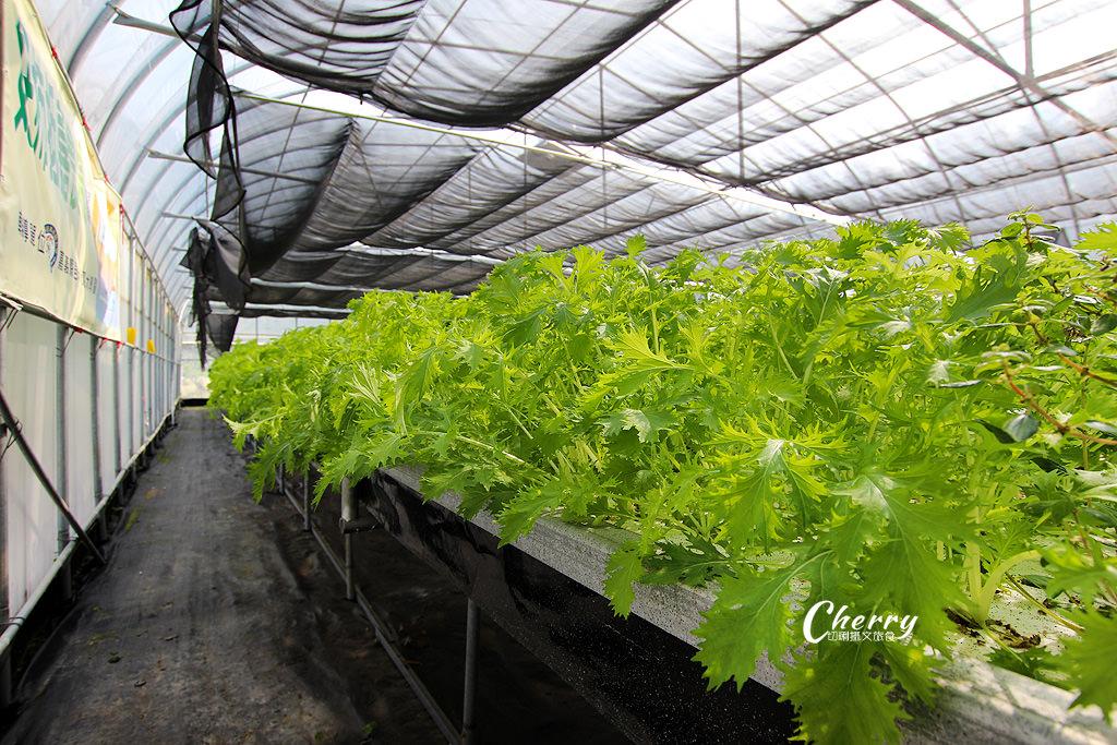 20171122121830_70 嘉義 番路好柿抵嘉農場,採果玩柿染還有露營趣
